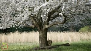Proljeće je razdoblje cvatnje